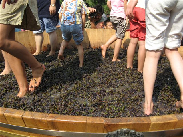 pressing grapes