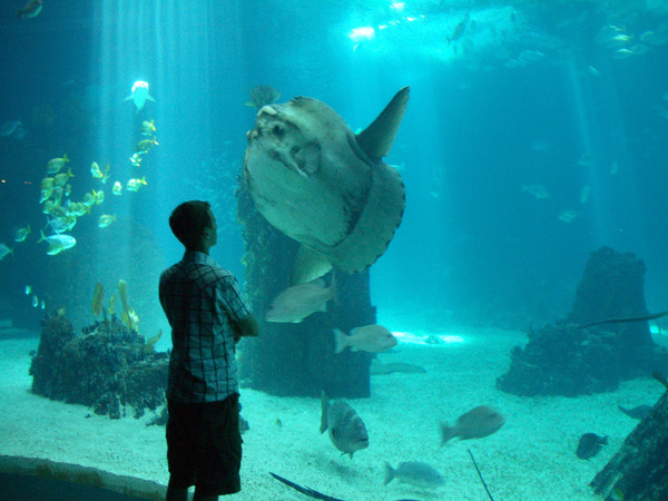 world best aquariums