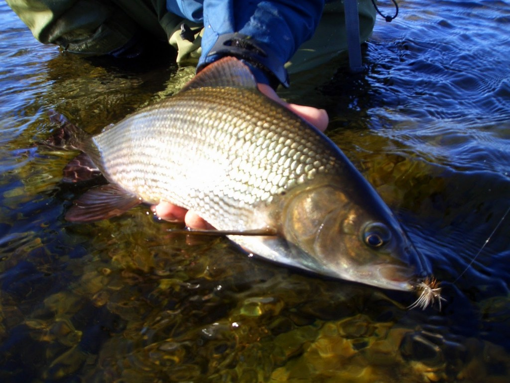 Best fishing spot resorts for Fishing in finland