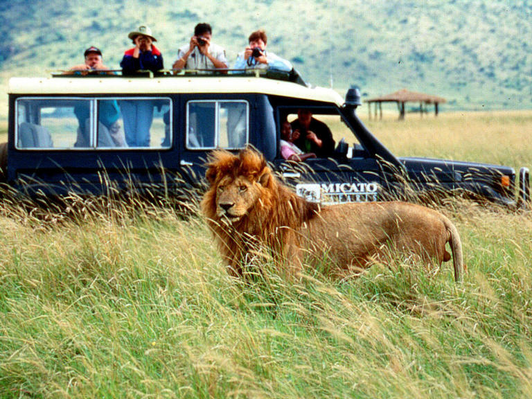 Safari Tour