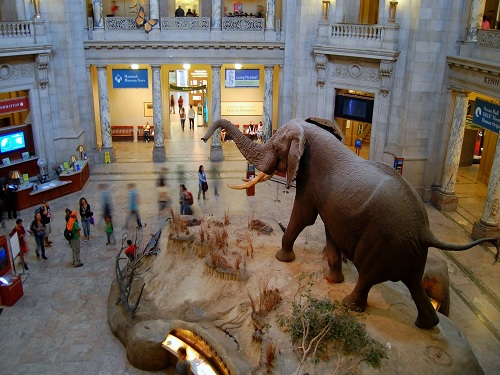Is There A Natural History Museum St Louis