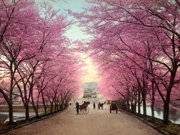http://www.travelvivi.com/wp-content/uploads/2012/02/Cherry-blossom-in-japan.jpg