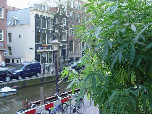 how to get weed in amsterdam