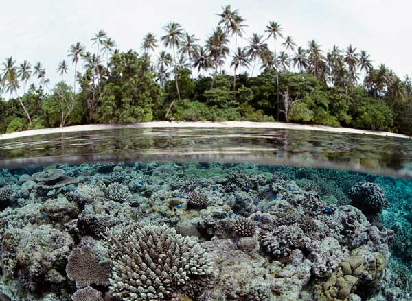 Most Beautiful Coral Reefs in the World | TravelVivi.com  Most Beautiful ...
