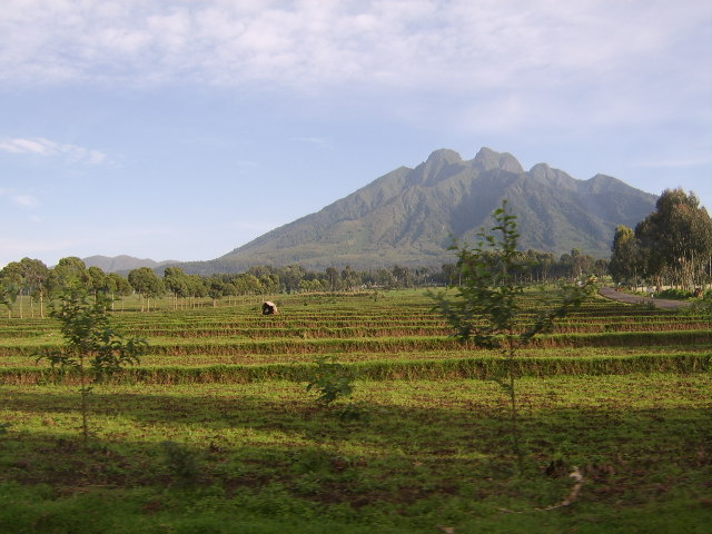Kenya 449